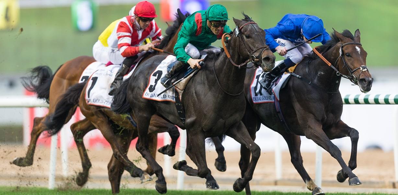 Apostas em Cavalos no Placard em 2019